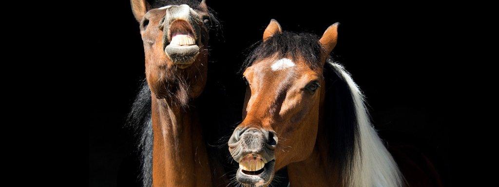 VergleichsrechnerPferdehaftpflicht