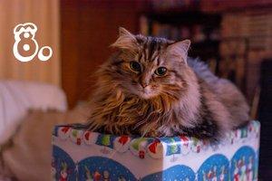 Haustier Weihnachten Hund Katze Versicherungen